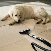 sws article carpet care vacuum and dog